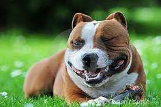 #dog #dogs #smile #fun #smiling