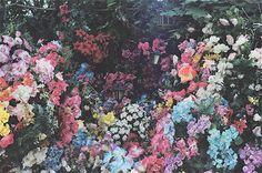 flora mélange