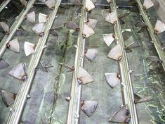 estrattore per fanghi biologici industriali