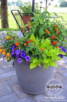 bright color and lots of blooms. I wanted sweet potato vine, lantana, geraniums and salvia in each pot. I also wanted flowers that would las...