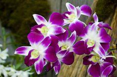 Visitante tem contato com diferentes espécies de orquídeas.