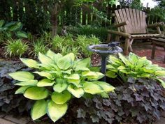 bright colored hosta, daylilies, and heuchera (coral bells) underplanted for dark contrast make a peaceful and relaxing space.
