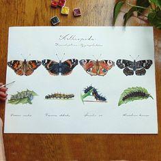 Butterfly Art, Botany, Biology, Artsy, Illustrations, Instagram, Illustration, Ap Biology, Illustrators