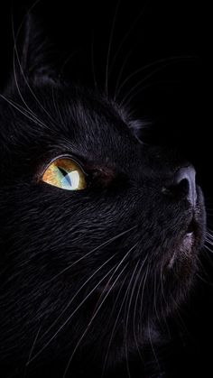 - October is Black Cat Awareness Month, so help spread the word about black cats and dispel some of the myths that keep them from finding forever homes! Here are the best names for black cats complete with beautiful pictures! Cute Cat Gif, Cute Cats, Funny Cats, Crazy Cat Lady, Crazy Cats, Beautiful Cats, Animals Beautiful, Beautiful Life, Names For Black Cats