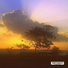 """""""UN ÁRBOL ENORME CRECE DE UN RETOÑO. UN CAMINO DE MIL PASOS COMIENZA EN UN SOLO PASO"""". Lao-Tsé #frases #amanecer #solnaciente #árbol #retoño #malecón #santodomingo #repúblicadominicana #caribe #dominicanrepublic #caribbean #maroteandord"""