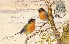 birds digital scan vintage postcard christmas jpg by Vintage Ephemera, Vintage Cards, Vintage Postcards, Images Vintage, Vintage Pictures, Pocket Letter, Mail Art, Bird Art, Beautiful Birds