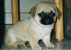 baby puggg