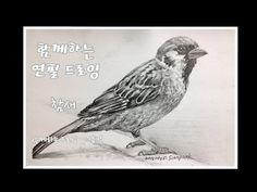 함께하는 드로잉 _ 연필 드로잉 _ pencil drawing _ 참새 _ sparrow _ 샴박 - YouTube