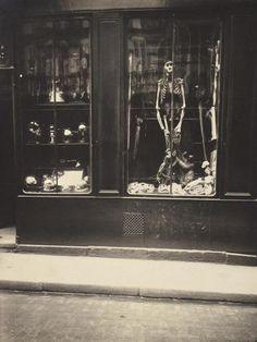Eugene Atget - Zoologist's Shop - Fine Art Print