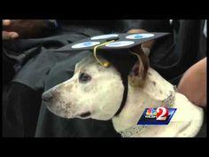 Training a Psychiatric Service Dog