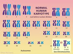 What are chromosomes? - Easy exam revision notes for GSCE Biology Exam Revision, Revision Notes, Gcse Exams, Mitosis Meiosis, Cell Theory, Pass My Exams, Case Presentation, Study Biology, Nucleic Acid