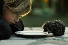 The Girl and the Hedgehog: Paris-based photographer Cath Schneider recently became aware of a small hedgehog living in her garden and decided to investigate a bit closer with her daughter. Schneider tells me they set out a small plate of (lactose free) milk and sure enough the fearless little guy ambled over and started blowing bubbles. Camera in-hand and graced with perfect lighting, she captured this amazing shot. #Photography #Hedgehog #Cath_Schneider