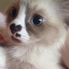 ❤️ on Kitty's Nose