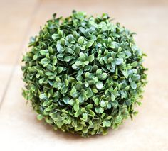 Ball Boxwood 23cm