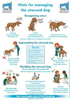Doggie Drawings.net | Recognizing Stress - Poster for the Association of Pet Behaviour Counsellors (APBC - UK)