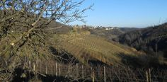village of Vinchio ...today 24 December 2014