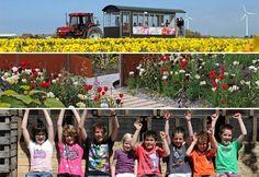 Ausflugstipp: Fluwel's Tulpenland - Ein fantasievoller und lehrreicher Spaß für die ganze Familie mitten in den Blumenzwiebelfeldern.
