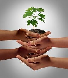 picture of symbols - Community cooperation concept and social crowdfunding investment symbol as a group of diverse hands nurturing a sapling tree with roots wrapped and connecting the people together - JPG Wealth Management Services, Lean On Me, Free Photographs, Nature Posters, Tree Logos, Connection, Investing, Social Media, Concept