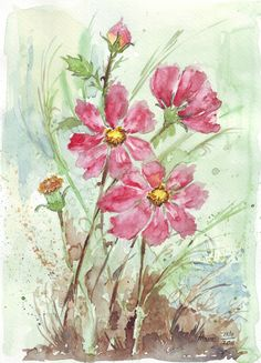 Sketching in Nature: A Rose amongst the Cosmos - Maree