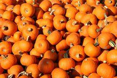 So Dope for Pumpkin Crack!