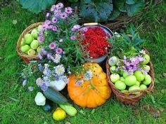 Химические удобрения и яды могут заменить самые обычные продукты - соль, сахар, чеснок, кефир, горчица.