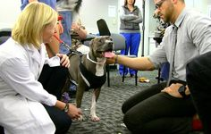 """A dog named Bean: """"One Health"""" initiative advances wellness for humans and animals"""