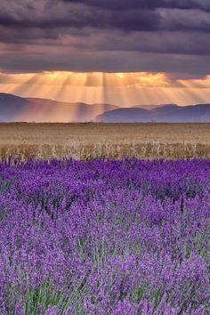Sunbeams over Lavender, Valensole, France by Michael Blanchette #mannafromdevon #sensoryoverload