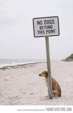 Rebellious dog…