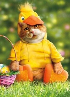 Also not a duck wearing a hat but still too funny to pass up!! 6. Dress up your pets! No easter would be complete without a cat dressed as a duck right? Google is your oyster. There are amazing pet outfits out there to make you smile. Just make sure your furry friend is having as much fun as you are when wearing their easter costume.
