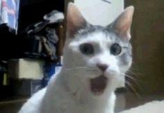 """Cat Ears. Human Ears. """"cat"""" Ears. - Meme Center"""