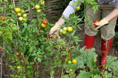 Why Garden?    The survey says:   Greater self-sufficiency47.76%;  Simply for the joy it brings32.77%;  To be more environmentally sustainable9.31%;   To save money7.98%; Community or family aspect1.57%; To sell at market0.6%.