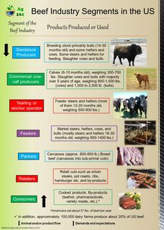 Beef Industry infographic from Ag 101. Genex knows beef inside and out. Learn more at http://genex.crinet.com/page45/Beef