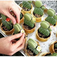 Have any green macarons on hand? Try out these adorable cacti macaron tarts by… Just Desserts, Dessert Recipes, Green Desserts, Macaroon Recipes, Drink Recipes, Dinner Recipes, Let Them Eat Cake, Cupcake Cakes, Cup Cakes