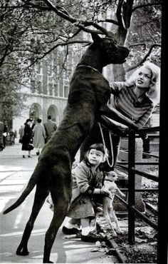 Jayne Mansfield with her daughter, Great Dane and Chihuahua