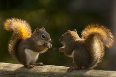 Photo You are so beautiful ! by Andre Villeneuve on 500px