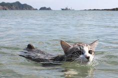 海辺で泳ぐニャン吉