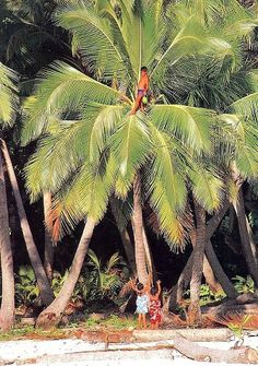 The palm tree was the main fruit Thor and liv relied on. Using the coconut oil, sauce, milk, and the shell.