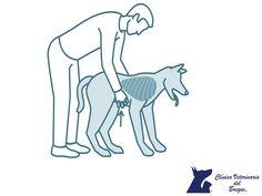 ¿Qué es la maniobra Heimlich? LA MEJOR CLÍNICA VETERINARIA DE MÉXICO. La maniobra Heimlich, es un procedimiento que se usa para ayudar a una persona o a las mascotas que se está asfixiando y que está consciente. La maniobra de Heimlich expulsa aire de los pulmones y le provoca tos. La fuerza de la tos podría entonces sacar el objeto de sus vías respiratorias. En Clínica Veterinaria del Bosque, contamos con médicos expertos para la atención de tu mejor amigo.  #veterinaria
