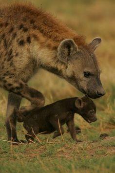 Hyena Cub and Mom