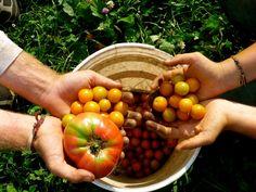 Eat organic on a budget!