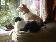 Ted & Toby watching the world go by!
