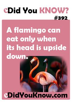http://edidyouknow.com/did-you-know-392/ A flamingo can eat only when its head is upside down.