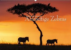 Mein Kalender des Tages - passend zum Poster des Tages:  Emotionale Momente: Anmutige Zebras