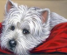 art and portraits of westies - Google Search