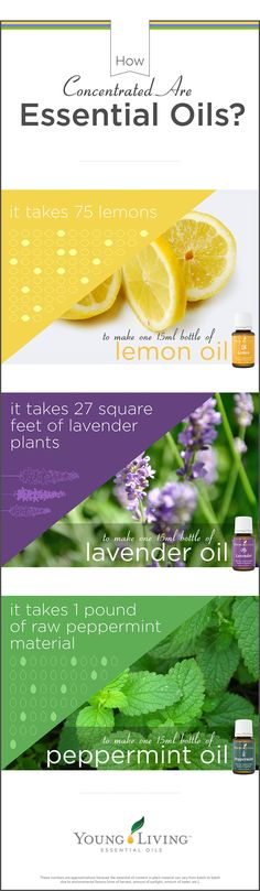 Young Living is the World Leader in Essential Oils. We offer therapeutic-grade oils for your natural lifestyle. Authentic essential oils for every household. Young Living Lemon, Young Living Oils, Young Living Essential Oils, Essential Oils 101, Therapeutic Grade Essential Oils, Essential Oil Diffuser, Pot Pourri, Living Essentials, Natural Oils