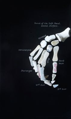 Detail of an x-ray style china skeletal hand from Bone China, a sculptural cabinet by Tasmanian artist Patrick Hall Collection of National Gallery of Australia, Canberra.