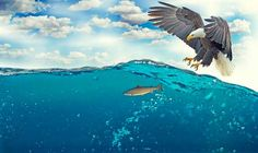 Soñar con águilas es una representación del conocimiento y la sabiduría. La visión de este pájaro depredador le permite controlar todo el entorno que le rodea, lo que en la interpretación de los sueños puede significar que el sueño puede estar relacionado con una advertencia. Eagle Images, White Tailed Eagle, List Of Birds, Bear Hunting, Hunting Tips, Nature Images, Riviera Maya, Tulum, Fly Fishing