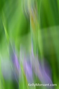 Slow Shutter Speed, Purple Fire, Abstract Photos, Iris, Weddings, Pictures, Photography, Image, Beauty