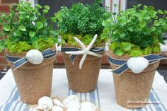 Sand and Seashell Covered Terra Cotta Pots