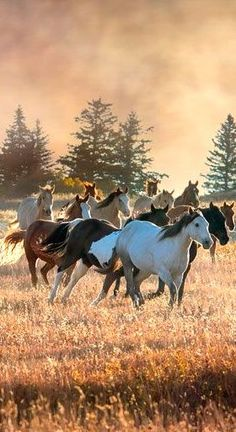 Horse - gorgeous picture » Sweet animals